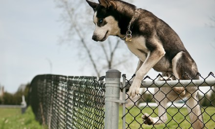How to Keep Your Dog from Jumping the Fence?
