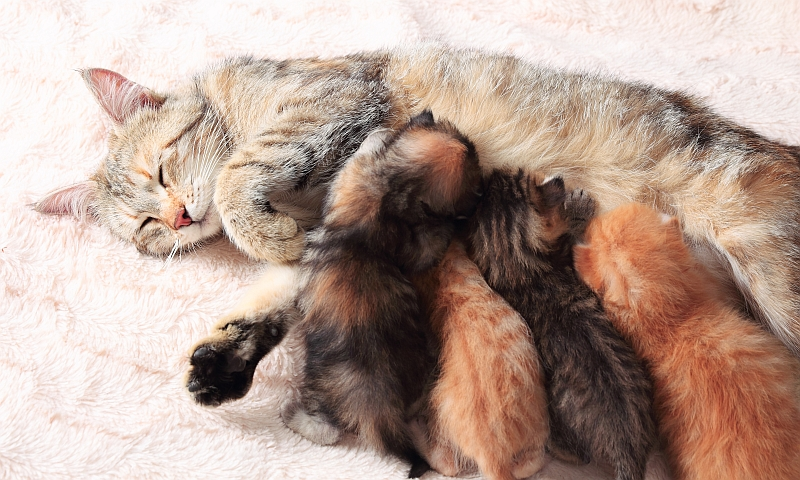 Nutritional Needs of Cats
