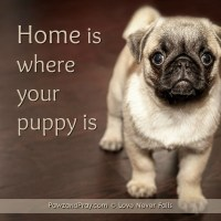 Home Is Where Your Puppy Is [dog quote image]