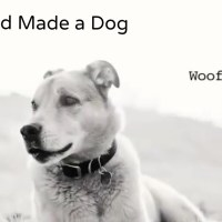 Why God Made Dog [video]