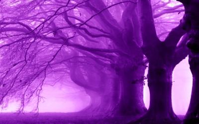 L'Articolazione dell'Anima ed il Pensiero