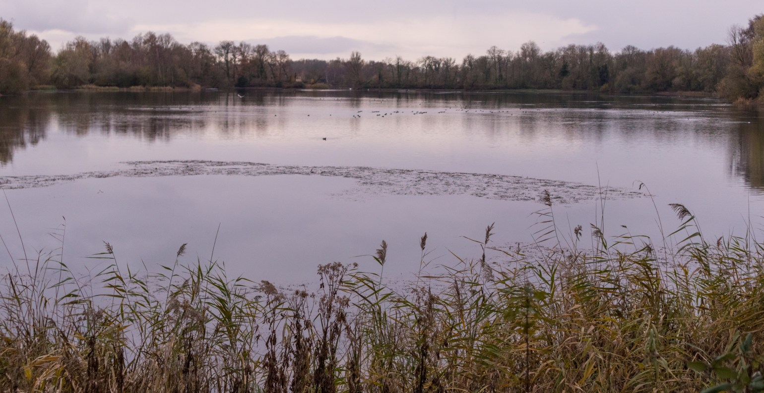 A view across Heronry Lake North in December