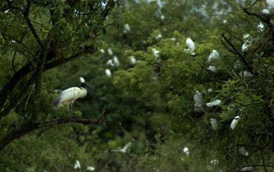 PAYANIGA - On a rainy day in Gudavi Bird Sanctuary