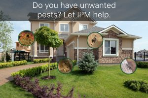 House with Pests