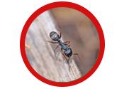 Ant and Insect Control