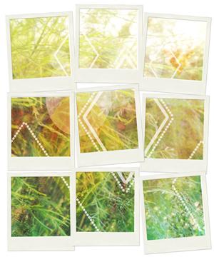 Pola 9 - Nature