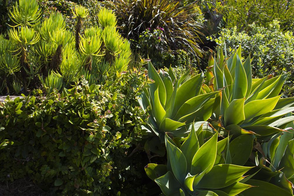 MALIBU DROUGHT TOLERANT HILLSIDE OASIS Viola Gardens