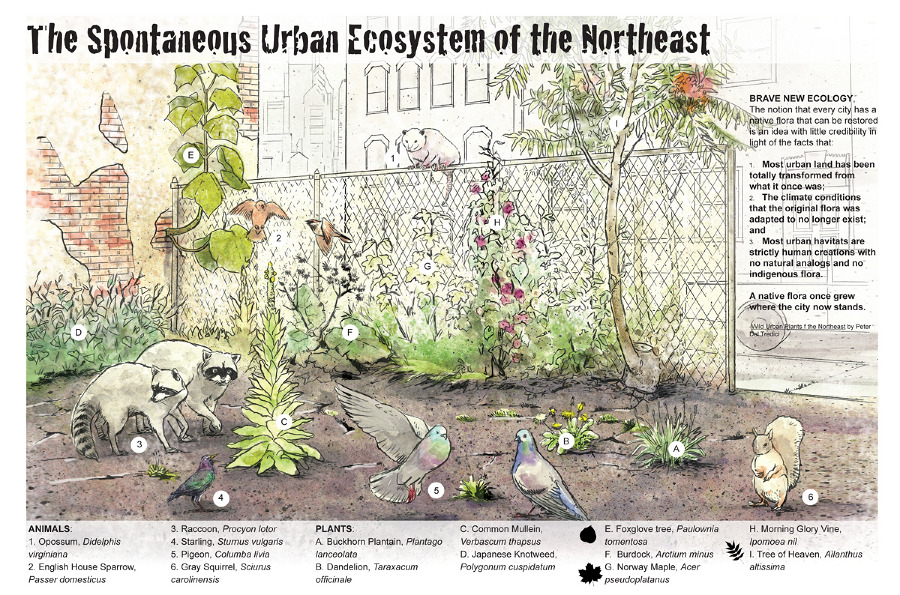 urban ecosystem andrew leach projects