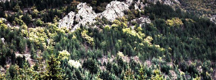 Les Cévennes Aveyronnaises au coeur des Grands Causses