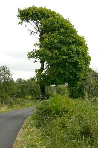 arbre-bord-de-route