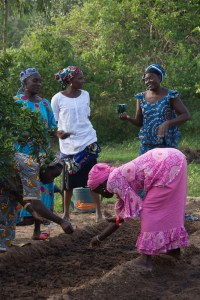 Plantation au jardin des femmes 2