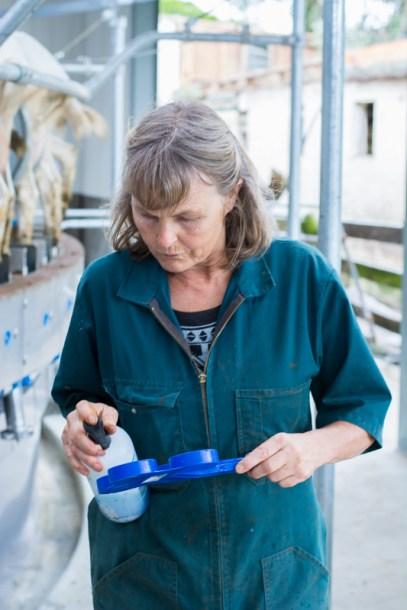 Kathy teste le lait de certaines chèvres apparemment contaminé par une bactérie - - En savoir plus : http://paysansdavenir.com/le-coin-des-innovations-chevres-au-vert/