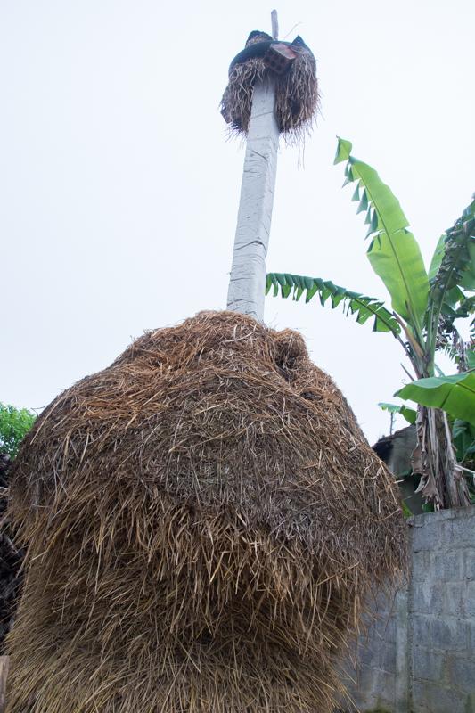 Stockage de la paille de riz - http://paysansdavenir.com/portrait-dagricultrice-duong-thi-duoc-eleveuse-de-bovins/