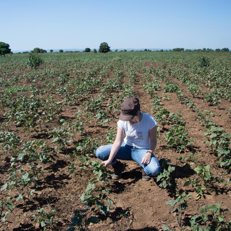 Votre envoyée spéciale constate les dégâts de la sécheresse sur le coton
