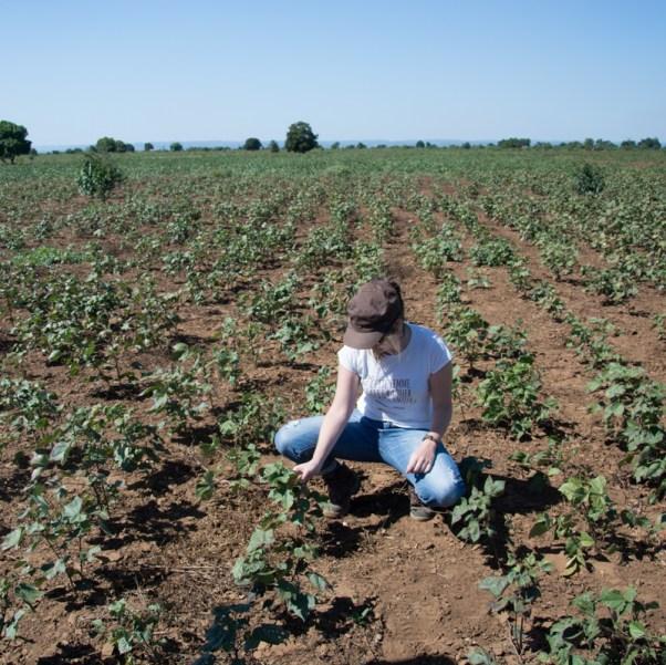 Laure-Line en plein auscultation des plants de coton !