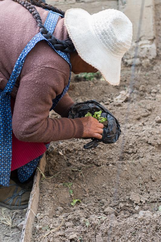 Agriculture urbaine à Sucre - pépinière dans une boite d'œufs ensuite il n'y a plus qu'à planter au bout de quelques semaines! - http://paysansdavenir.com/agriculture-urbaine-pourquoi-comment-lexemple-de-la-bolivie/