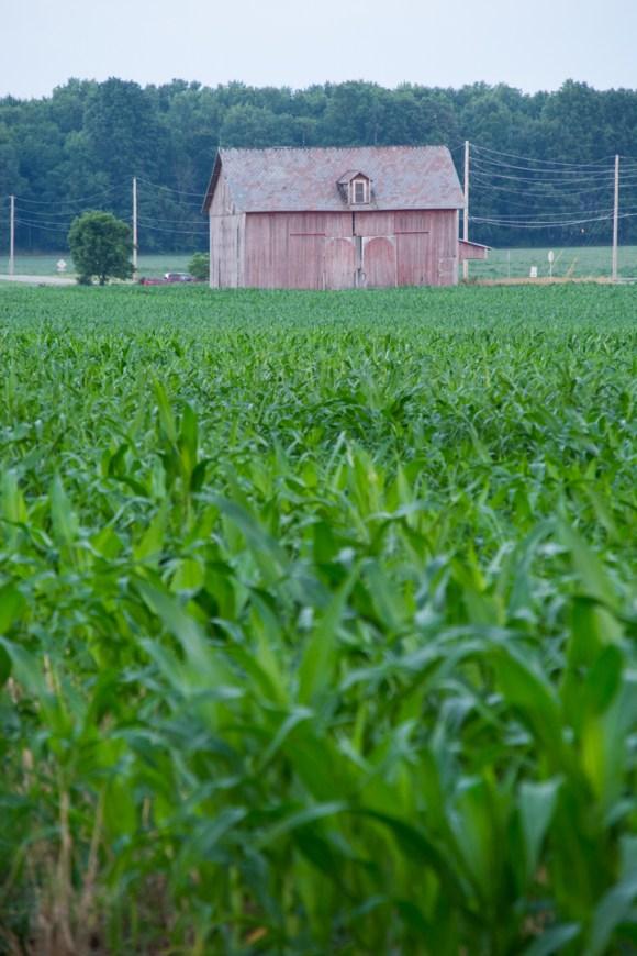La grange du bout du champs
