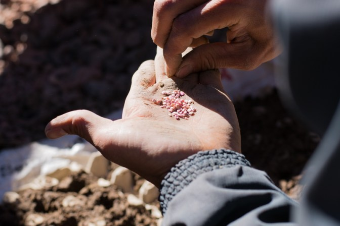 Agriculture urbaine à Sucre - pépinière dans une boite d'œufs : quelques graines par trou - http://paysansdavenir.com/agriculture-urbaine-pourquoi-comment-lexemple-de-la-bolivie/