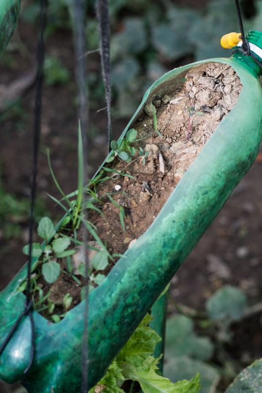 Agriculture urbaine à Sucre - Un exemple de jardinière en matériel de récupération et réutilisable - http://paysansdavenir.com/agriculture-urbaine-pourquoi-comment-lexemple-de-la-bolivie/