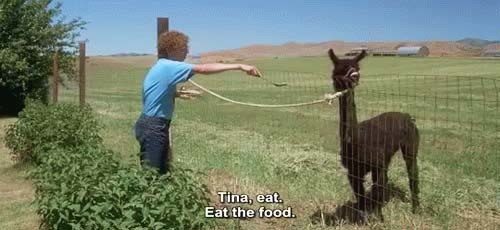eat the food tina