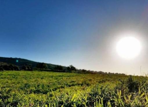 حالة الطقس: توالي ارتفاع درجات الحرارة حتى نهاية الأسبوع