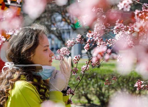 كيف تفرق بين أعراض حساسية الربيع وأعراض كورونا؟
