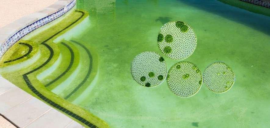 Micro Algae Image