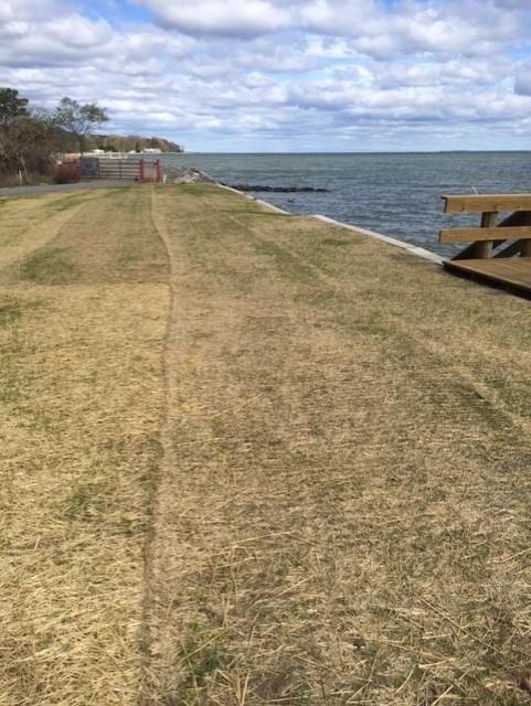 common area grass april 7