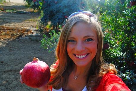 pom orchards 077