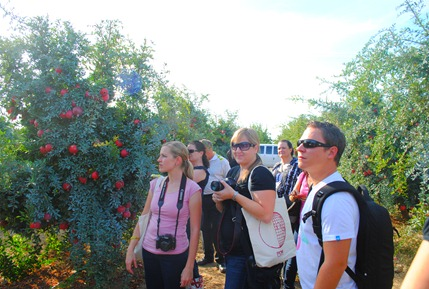pom orchards 078