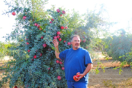 pom orchards 079