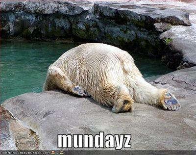 funny-pictures-monday-polar-bear