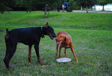sadie dog park 016