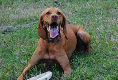 sadie dog park 019
