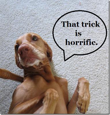 dog hates trick