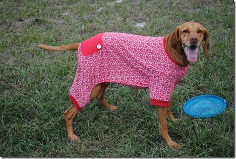 dog pajamas red 039