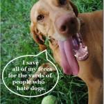 dog poop funny