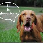 glorious dog