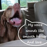 voice sounds like butter