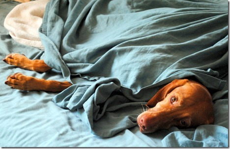 dog in bed 037