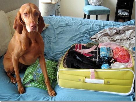 dog packing