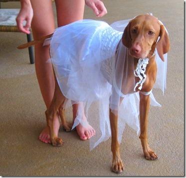 dog bride