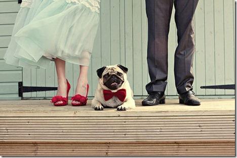 pug in wedding