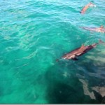 wild side oahu dolphin tours