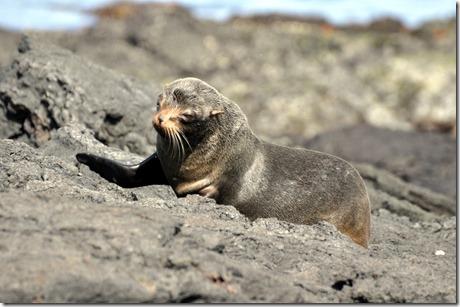 Sea Lion Galapagos Islands