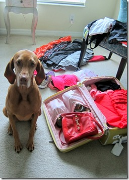 Suitcase Anxiety Dog