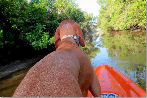 dog kayaking