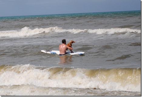 vizsla surfing