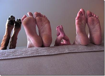 dog's feet maternity photo