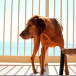 Dog Hunting Shadows